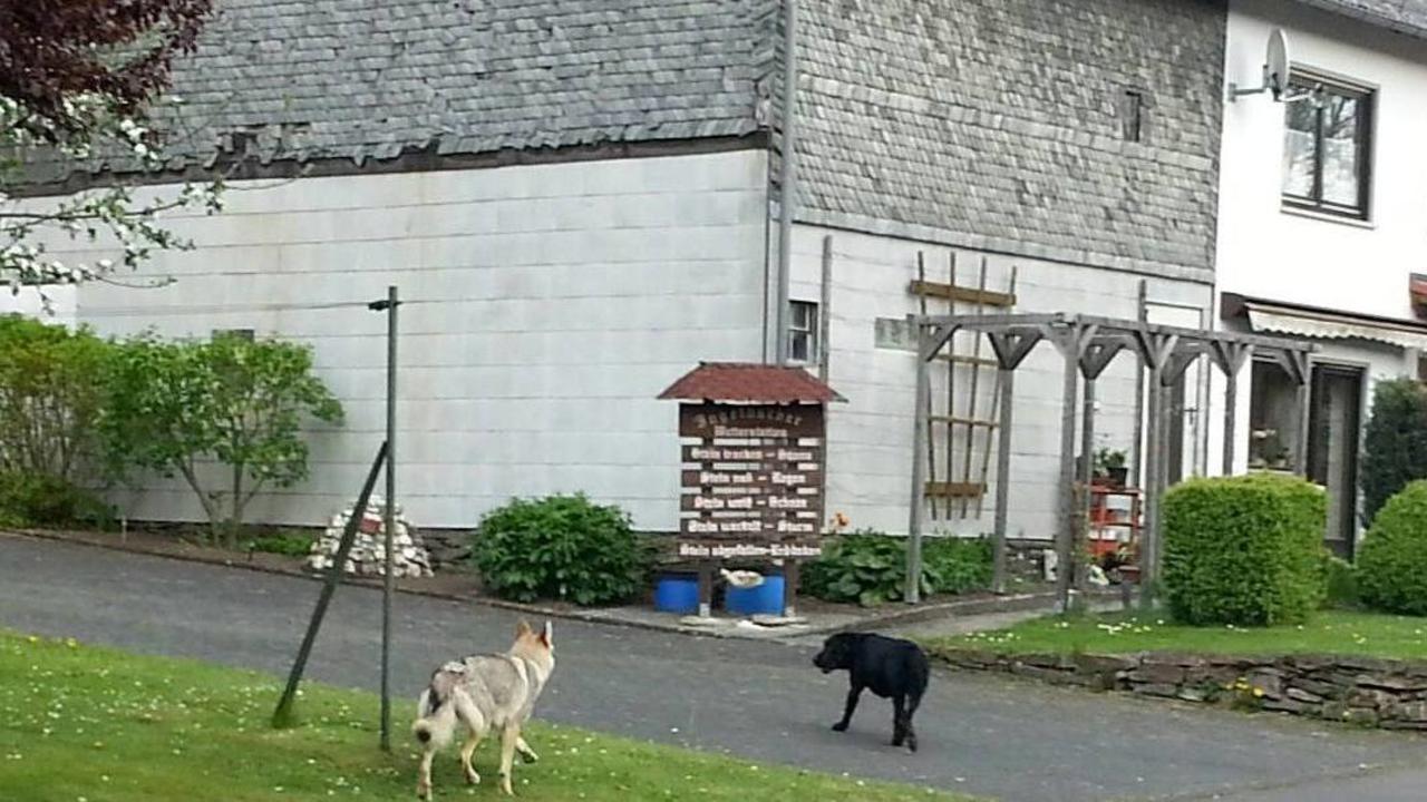 polizei frau fotografierte wieder wolf im westerwald region rhein zeitung. Black Bedroom Furniture Sets. Home Design Ideas