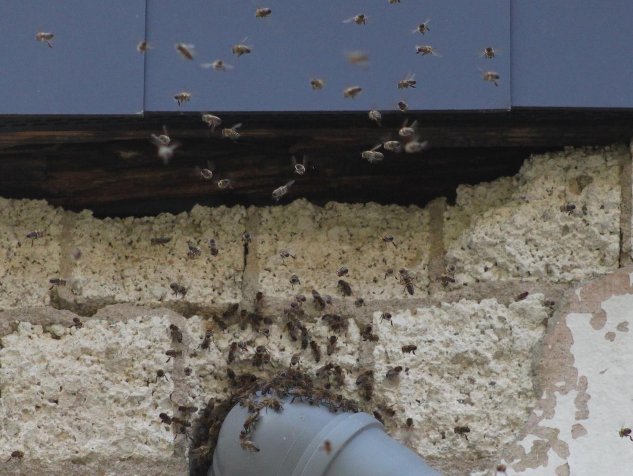 Sehr Ansprechpartner finden: Was tun, wenn Bienen und Co. einziehen VU37