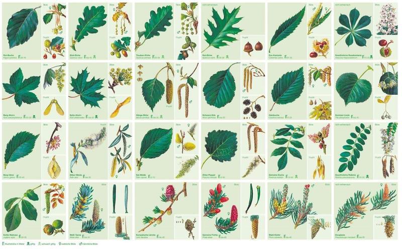 Was Ist Das Für Ein Baum bäume und sträucher des waldes unsere natur rhein zeitung