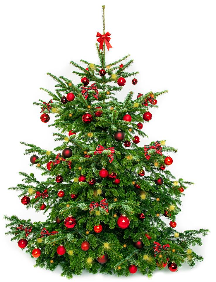 treue preise der weihnachtsbaum wird nicht teurer. Black Bedroom Furniture Sets. Home Design Ideas