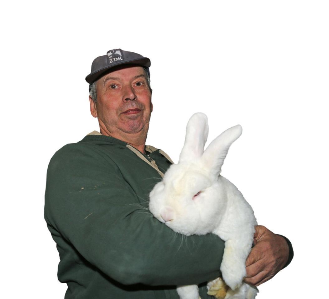 Junge Kaninchen Sterben Plötzlich