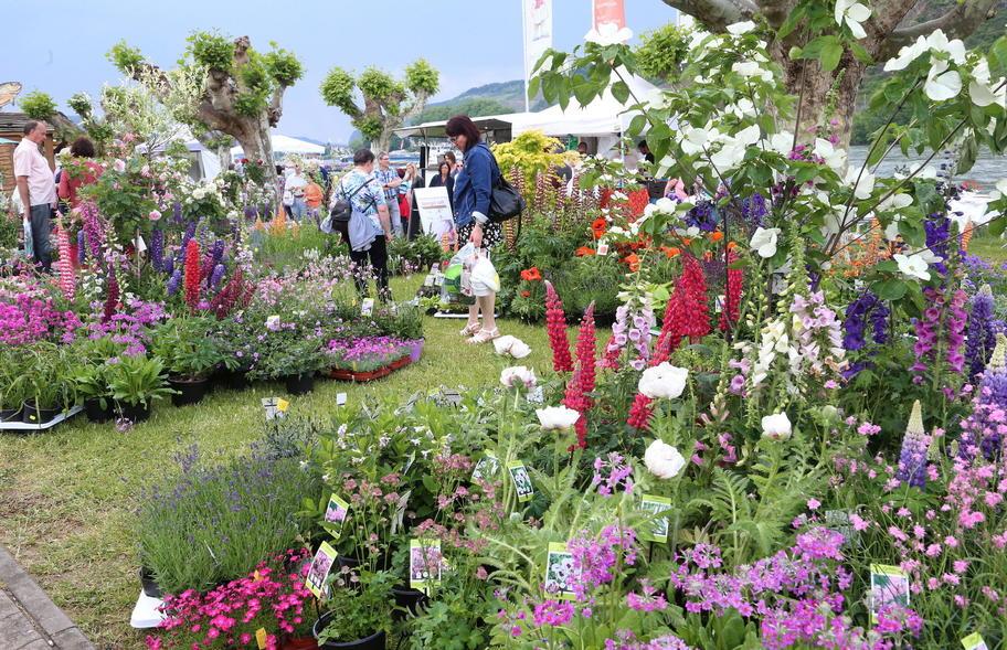 Tausende In Andernach Warum Die Gartenmesse Bei Besuchern Beliebt