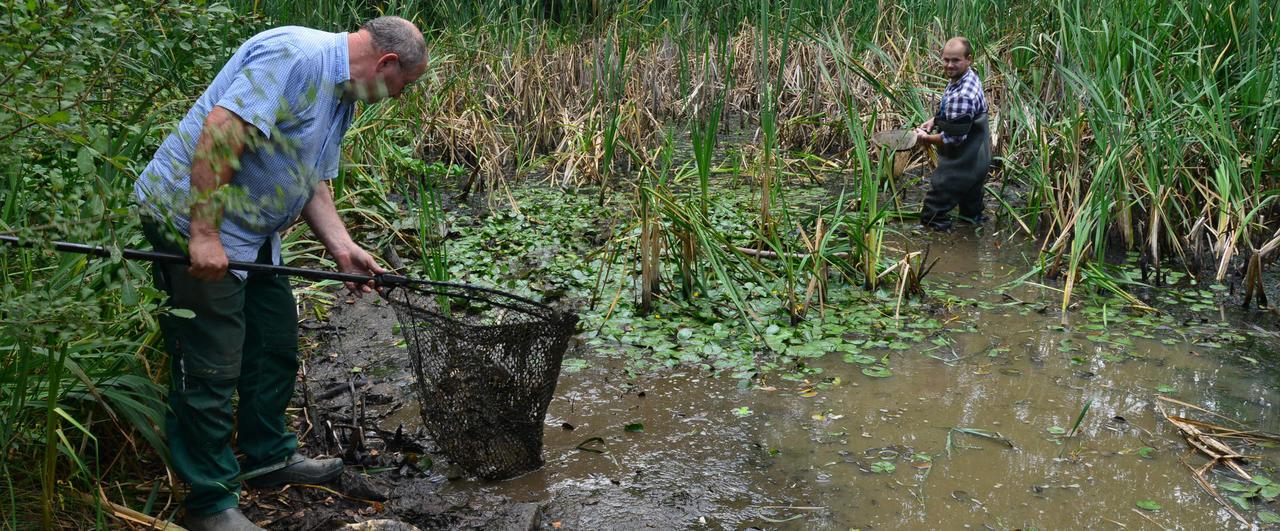 Gemeinsame Niedrigwasser in kleinen Biotopen: Fische schnappen nach Luft &XI_75