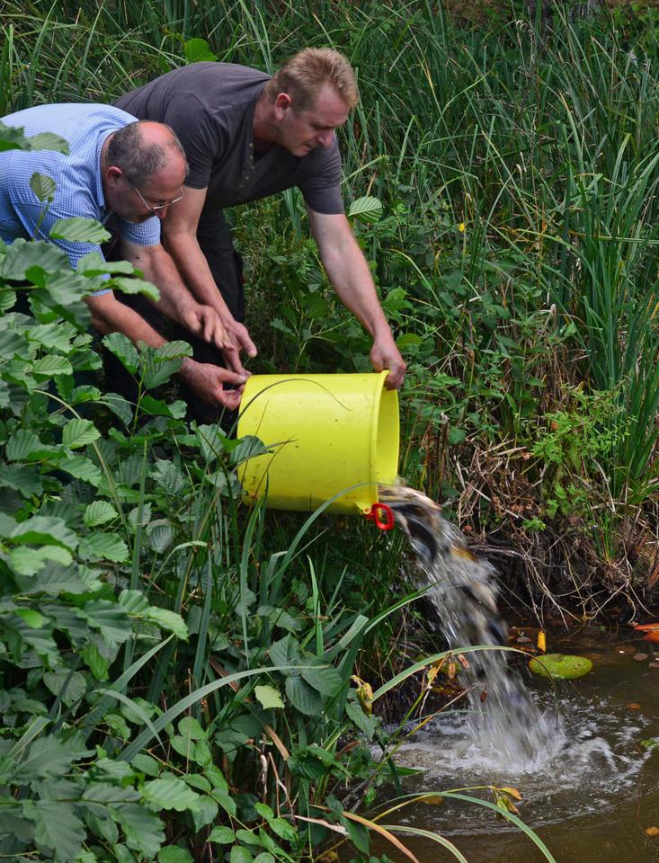 Etwas Neues genug Niedrigwasser in kleinen Biotopen: Fische schnappen nach Luft &UD_49