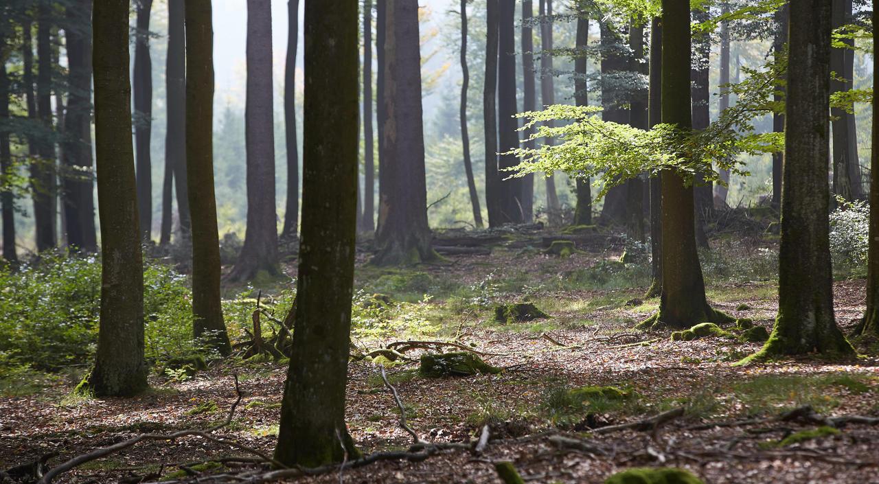 Waldbesitzer Schlagen Alarm Holzpreis Ist Nach Dürresommer Im