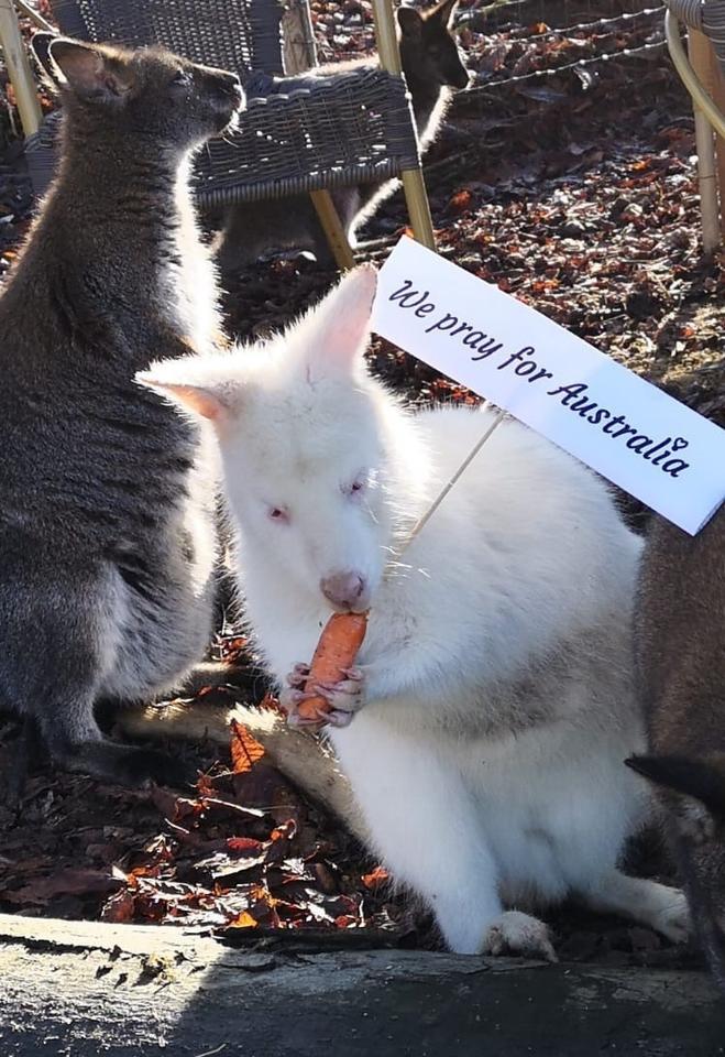Deutschland Hilft Australiens Wildtieren