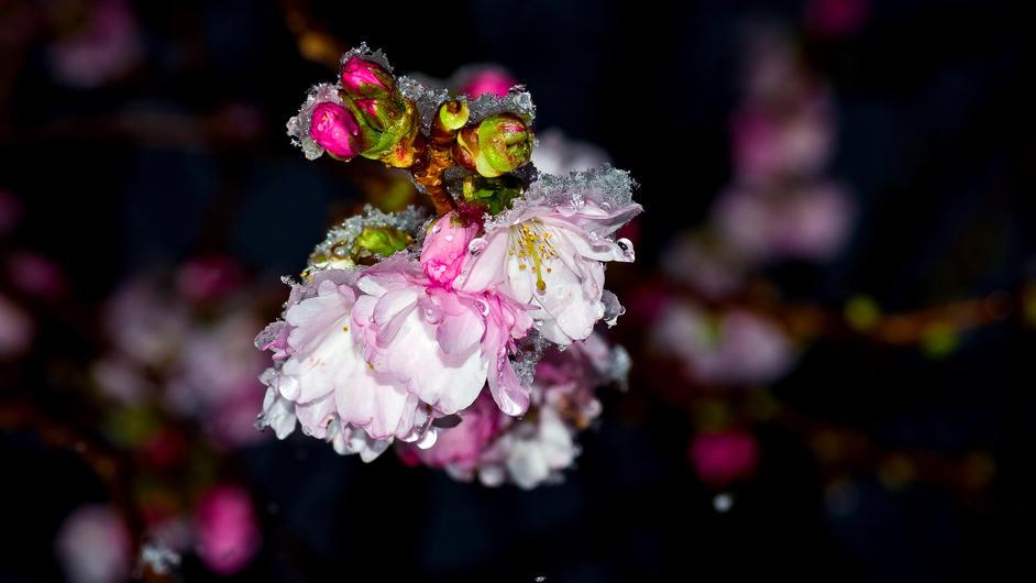Punkte Bettschnecke Romantik Blumen die ganz Besondere!