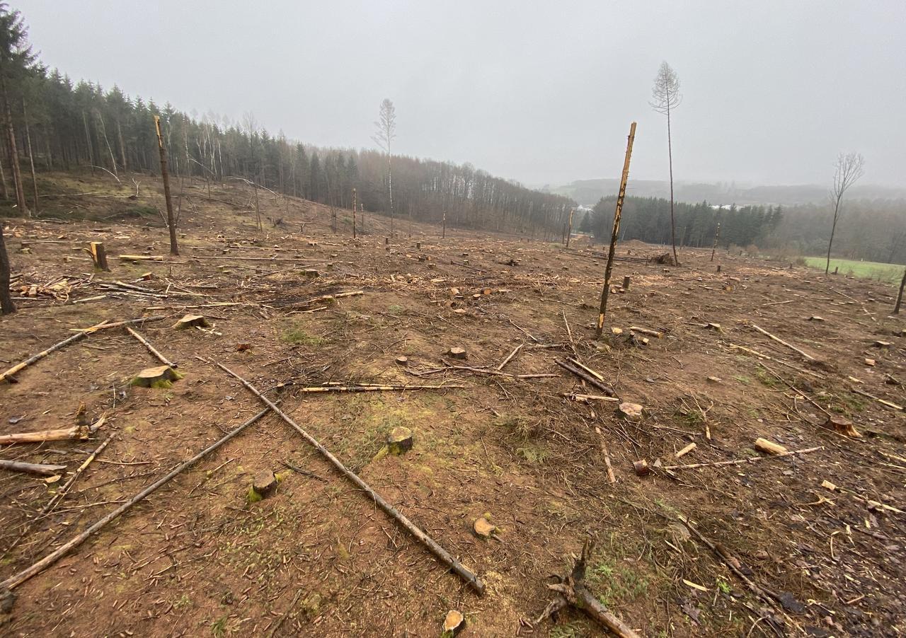 Von braun zu grün? Trotz der Borkenkäferplage besteht Hoffnung für den heimischen Wald