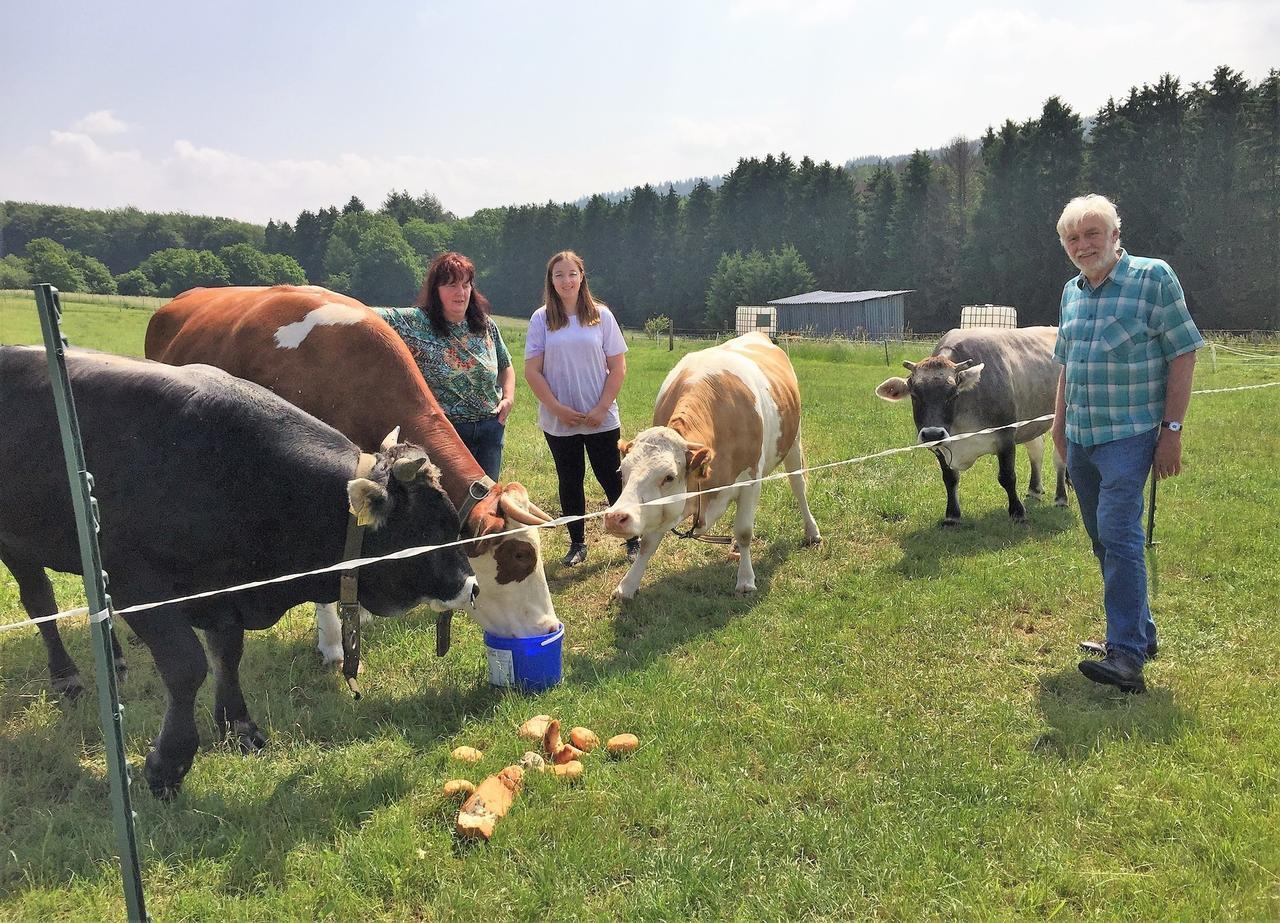 """Kleinrassige Rinder sind ideale """"Rasenmäher"""": Wie die Tiere von Carola Siemes den Streuobstwiesen in Merkelbach nutzen"""