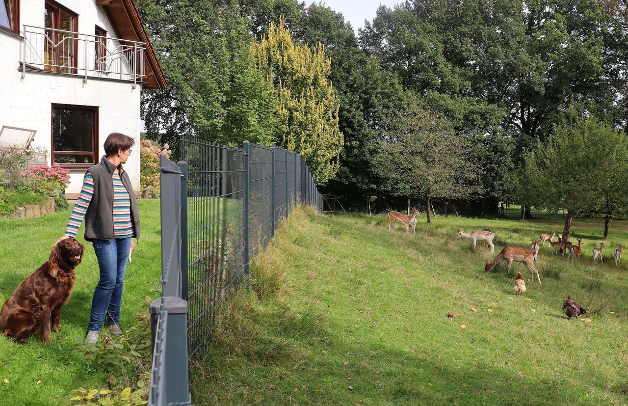 Wolfsangriff in Rettersen: Halterin beobachtet Damwildriss am Haus